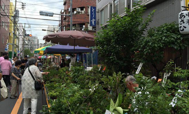 お富士さまの植木市